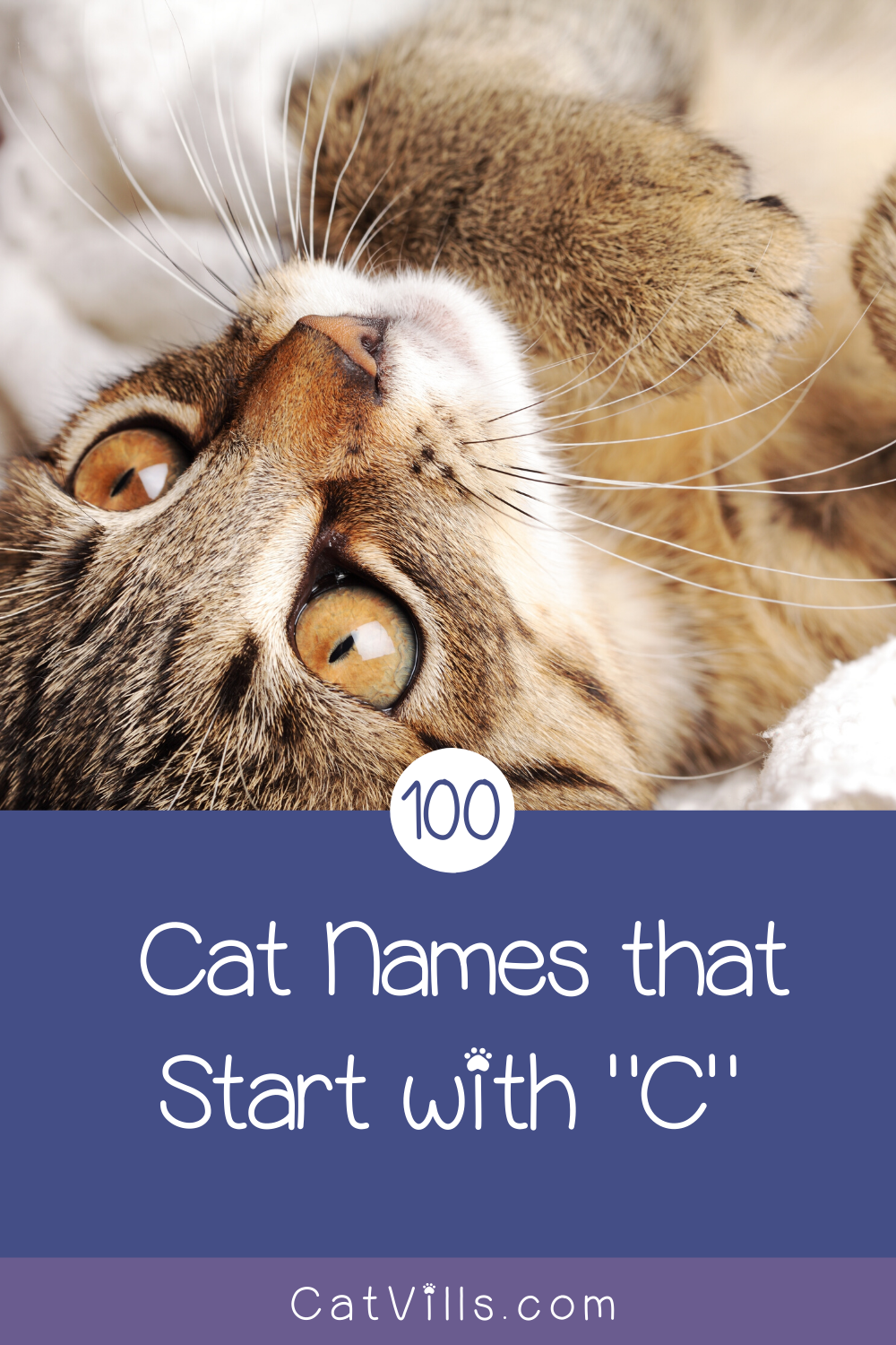 100 Cat Names That Start With C Catvills In 2020 Cat Names Cute Cat Names Boy Cat Names