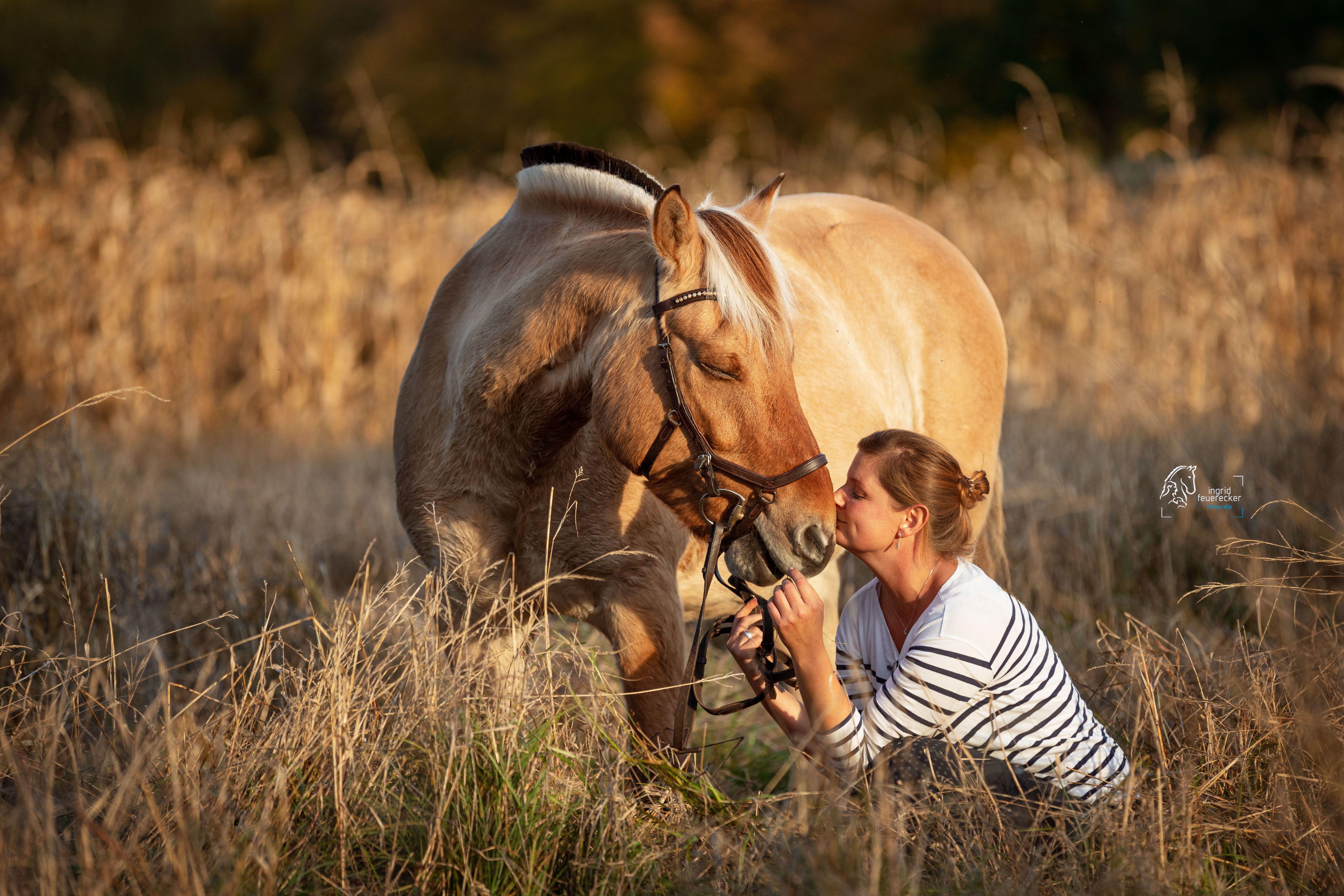 pferd mensch portrait in der natur  pferde fotografie