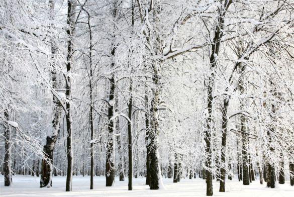 Winter Photography Backdrops Snowscape Photo Backgrounds Winter Vinyl Photographic For Backgrounds Photo Backdrops Winter Snow Photography Snow Photography Winter Scenery