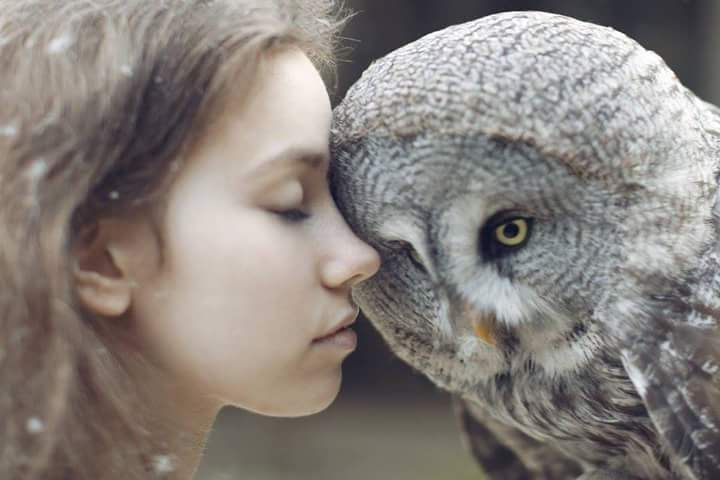 Bartkauz - Great Grey Owl  Fotograf nicht bekannt