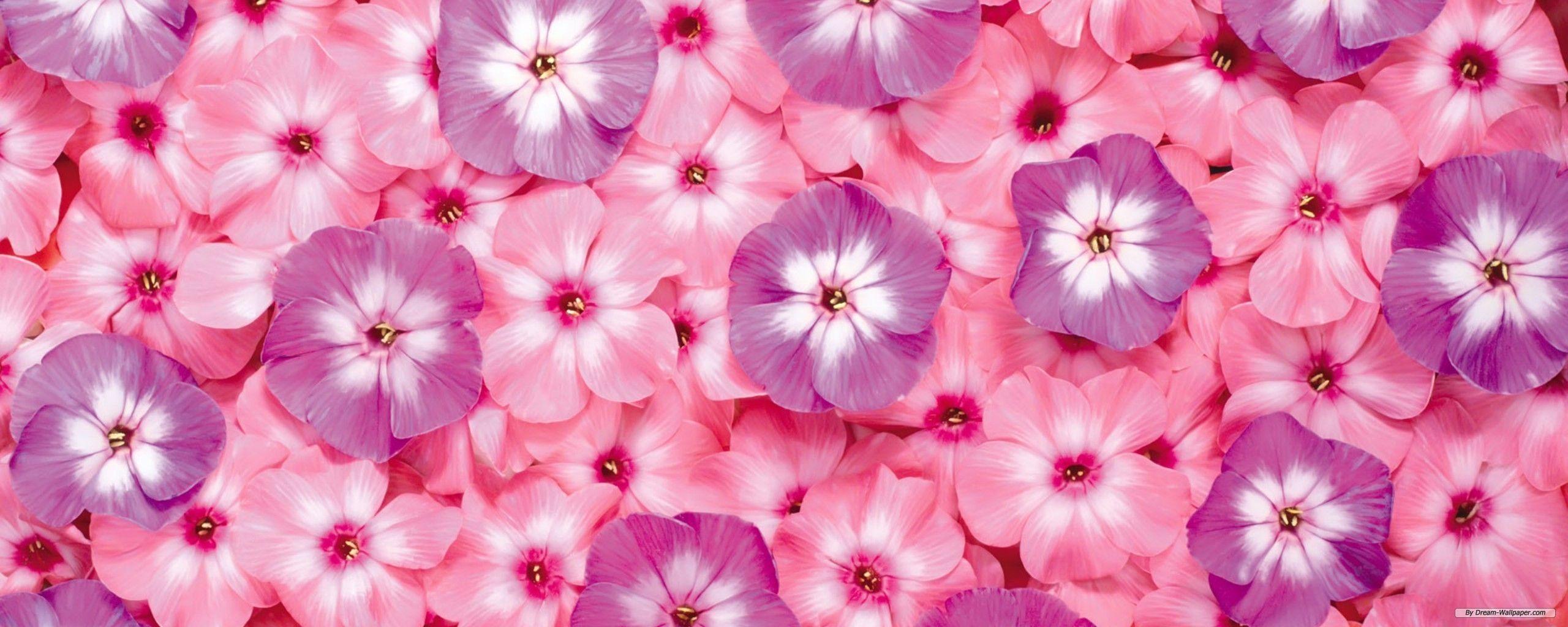 Tumblr iphone wallpaper purple - Iphone Flower Backgrounds Group 1280 800 Tumblr Flower Wallpapers 40 Wallpapers Adorable