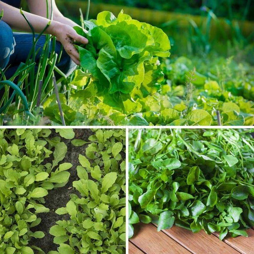Салаты зеленые листовые фото