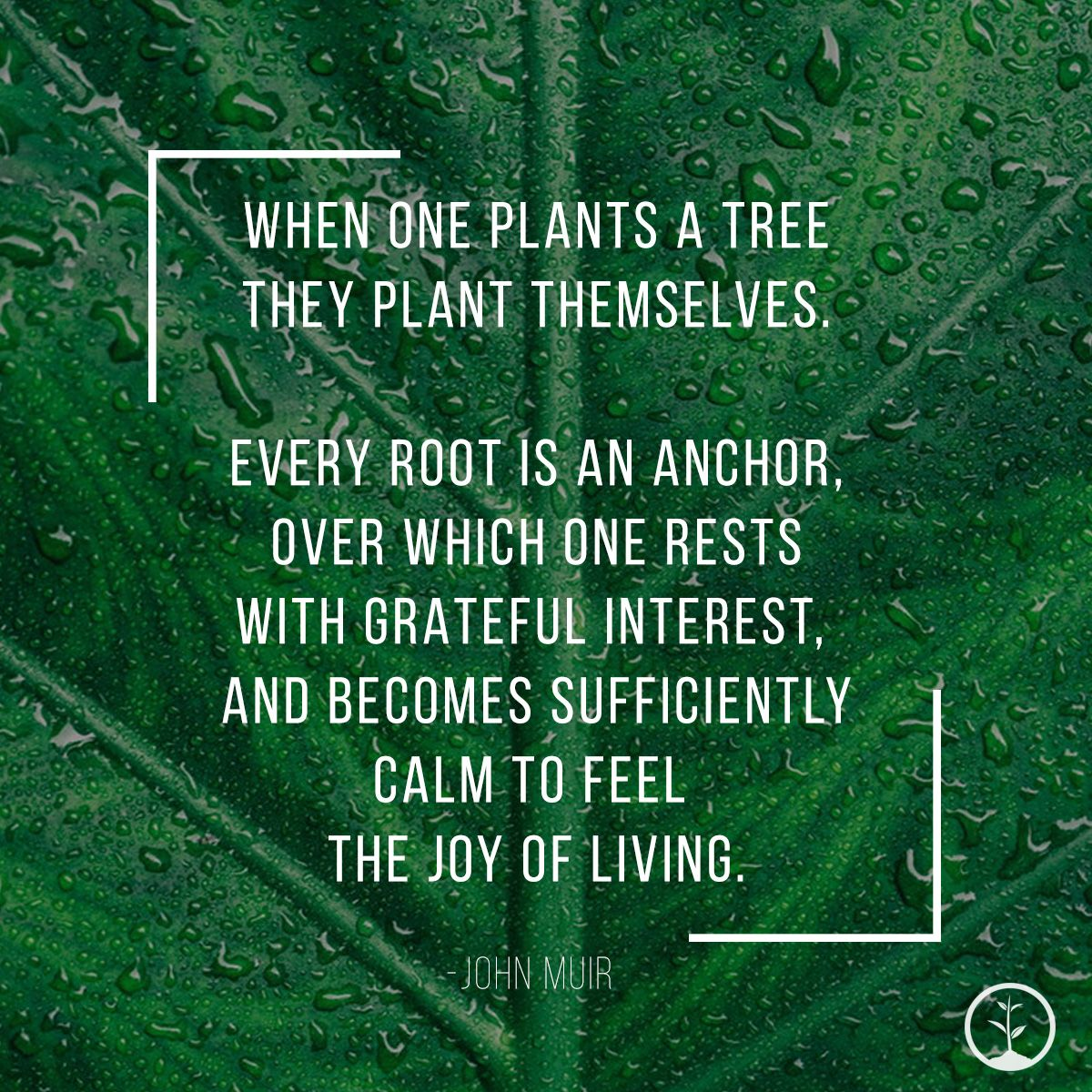 John Muir Tree Quote Tree quotes, John muir, Nature quotes