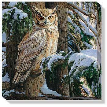 Great Horned Owl Framed Print by Rosemary Millette