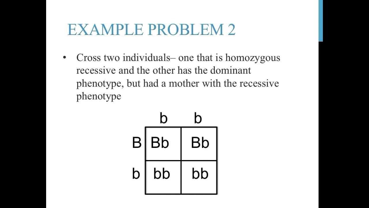 worksheet Punnett Square Problems Worksheet punnett square practice problems simple college academics this video will provide some involving complete dominance