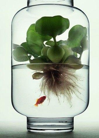 Terrarium Succulent Plants In Mason Jar Water Plants Table