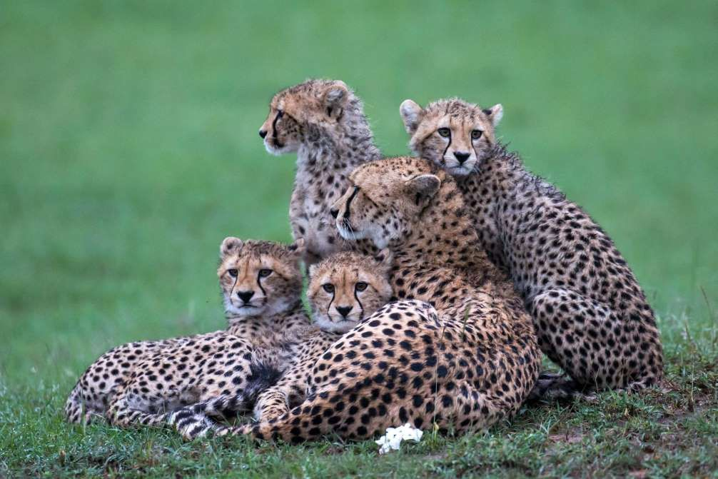 Mother's Day wildlife by Paul Goldstein - Feb 2015 - Paul Goldstein/REX