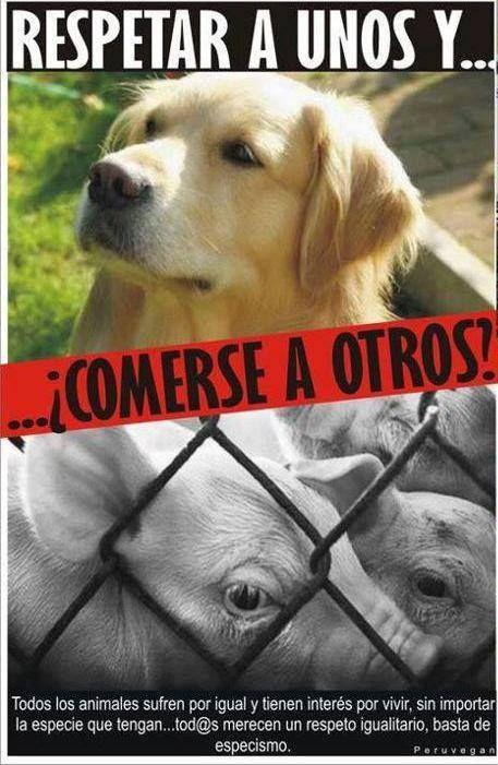 Pin De Nayeli Guzman En Animal Love Derechos De Los Animales Cuidar Animales Animales