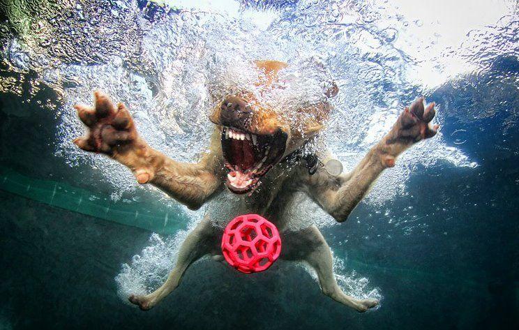 Dog happiness
