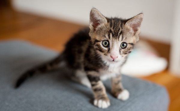 Adorable names for your new kitten you may not have considered