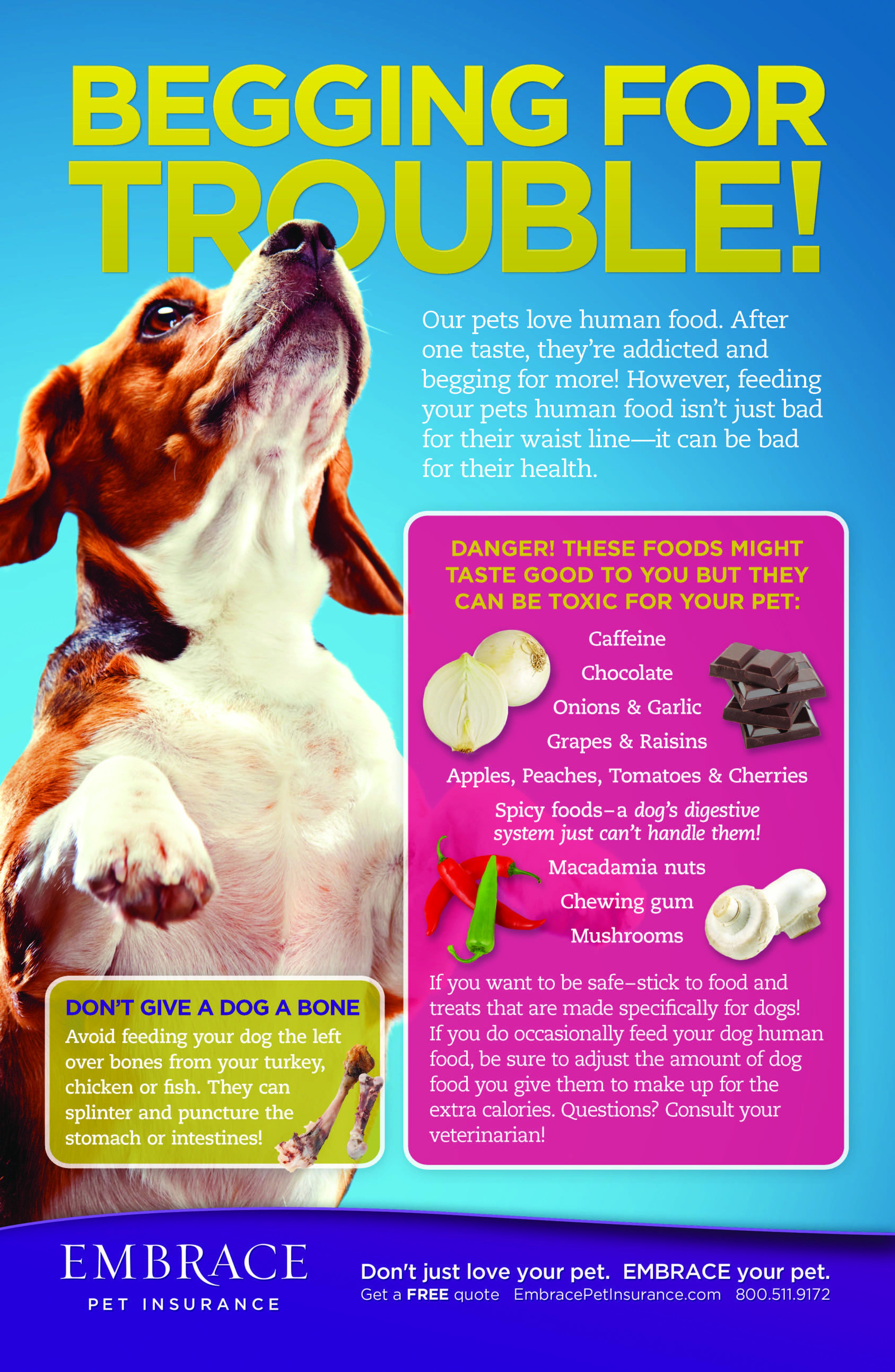Pin By Sara Radak On Puppy Love Pet Health Cat Health Dog Care