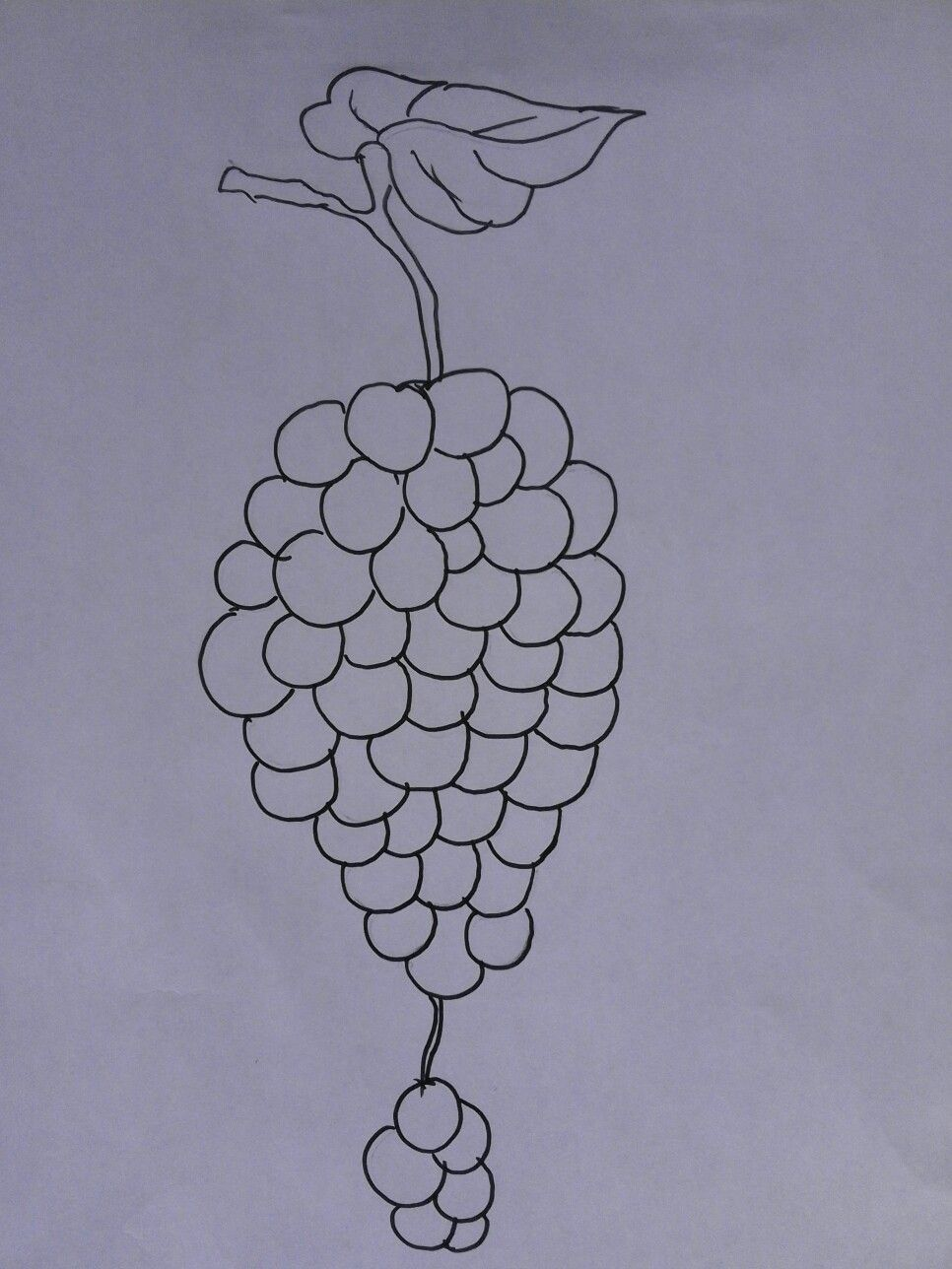 Contoh Pola Buah Anggur Untuk Mewarnai Design Pinterest Design