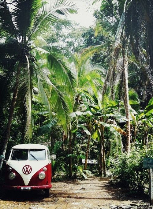 VW van in tropical palms