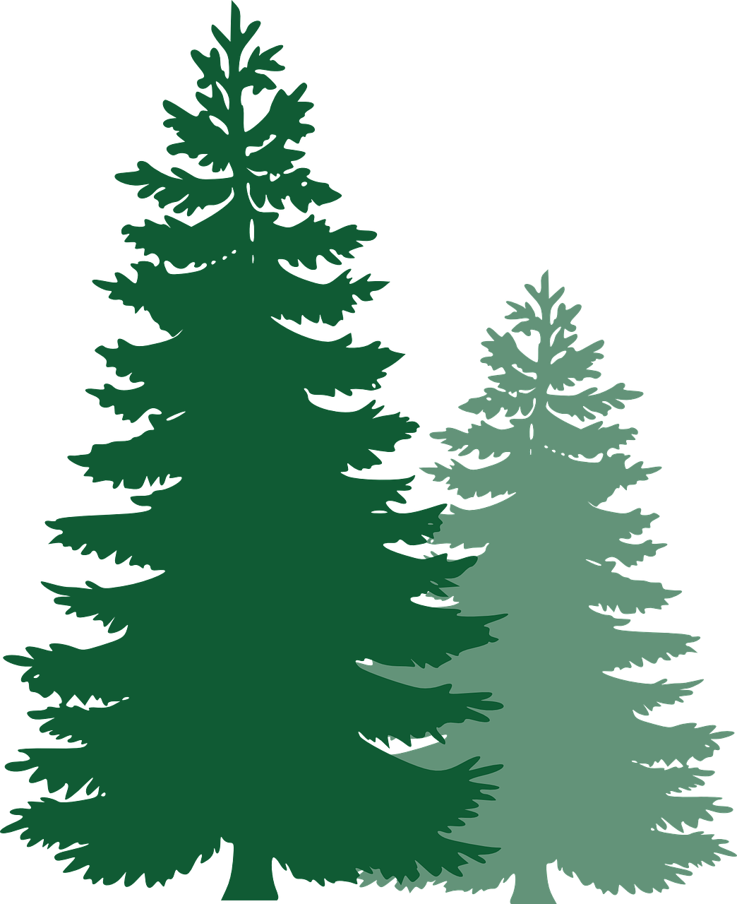 small resolution of pine trees spruce trees evergreen trees tree spruce