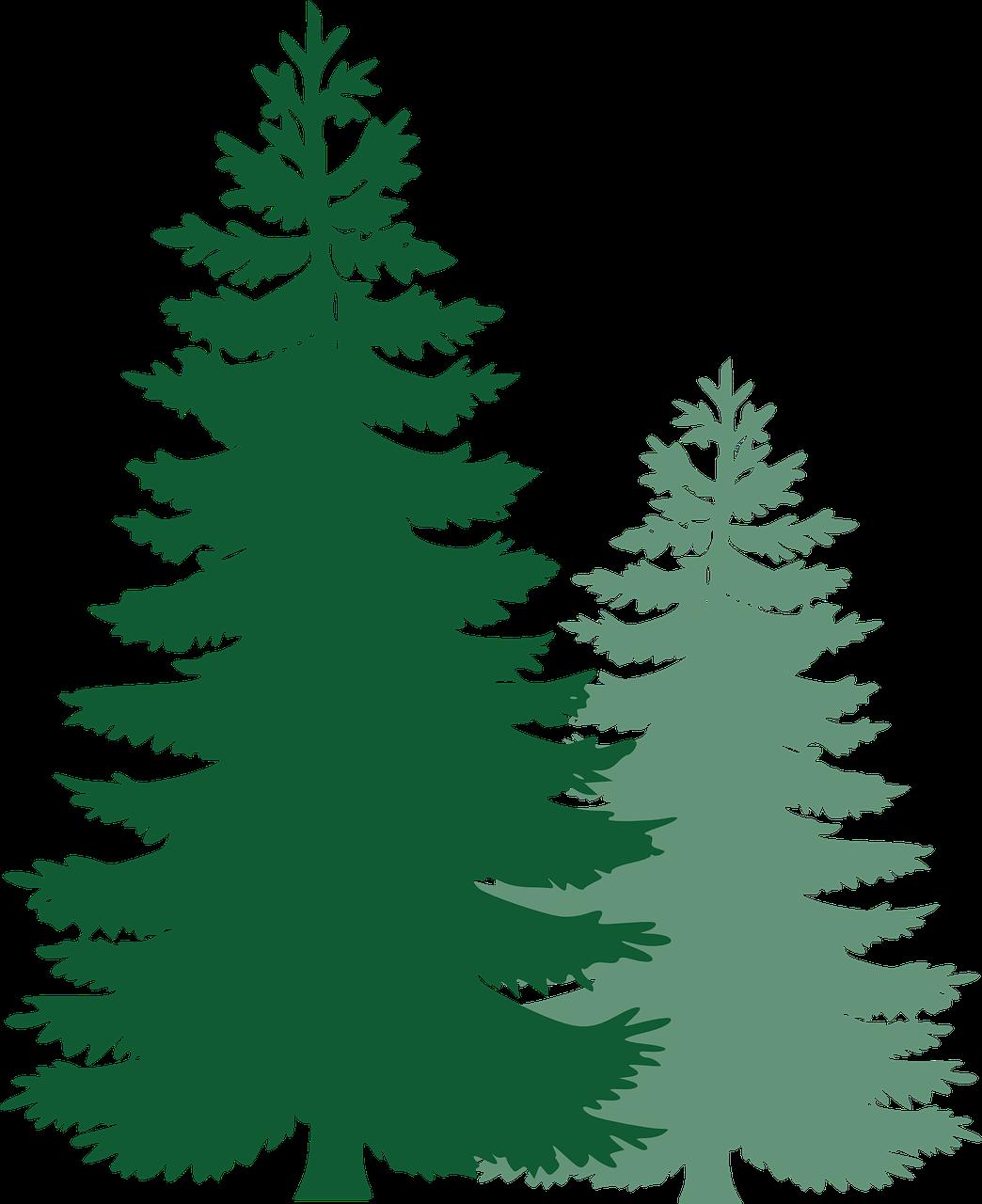 Trees evergreen. Free image on pixabay