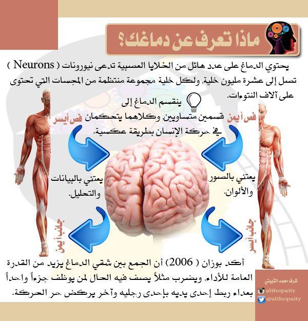 معلومة عن الدماغ مبسطة للفهم والحفظ Health And Beauty Tips Rosalia Better Life