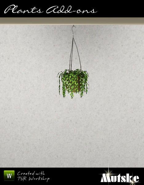 mutske's Hanging String of pearls