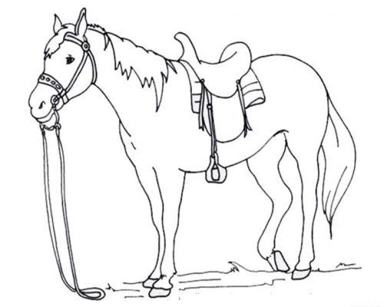 Gambar Kuda Untuk Mewarnai Anak Paud Binatang Adult Coloring