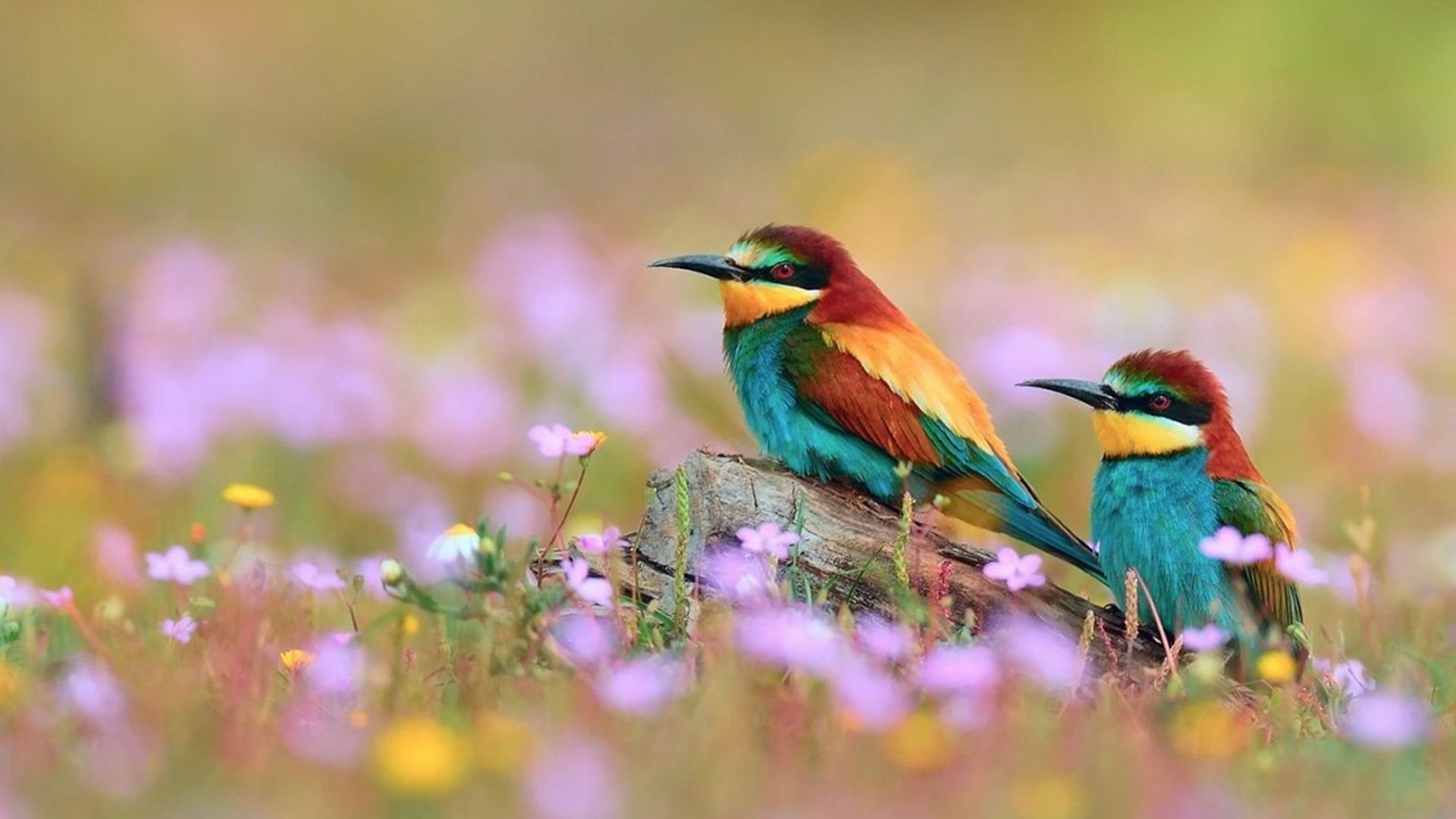 colorful birds | Flowers And Colorful Birds Photos,HD ...