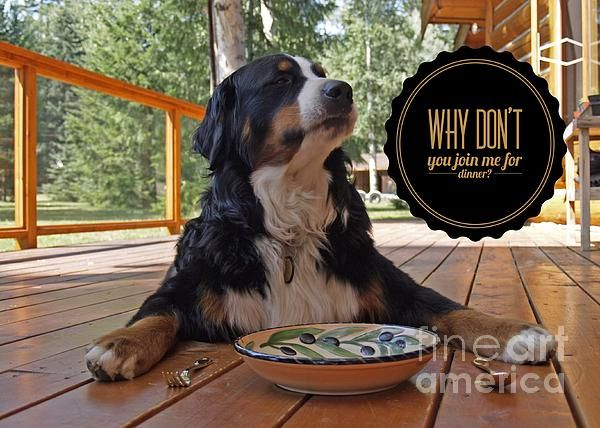 Dog Dogconnection Petograph Love Dinner Food Aggression In