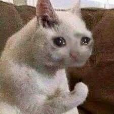 crying cat, cat memes | Gatos estranhos, Animais ...