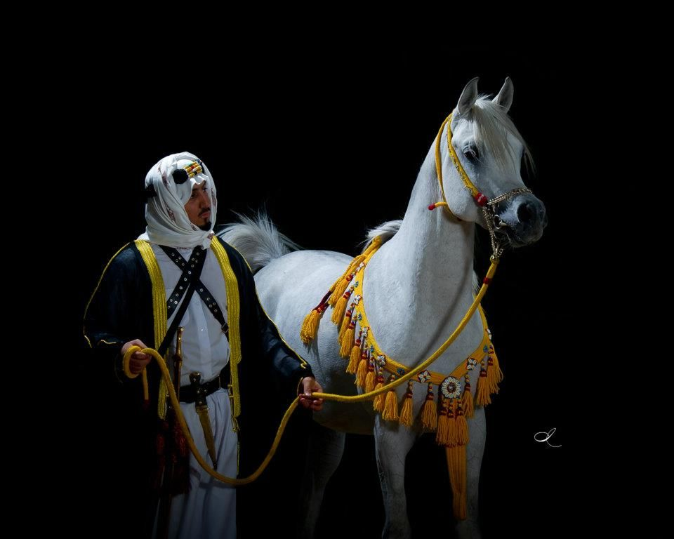 سياحة في حديث تلك السكينة تنزلت بالقرآن Beautiful Arabian Horses Arabian Horse Art Horses