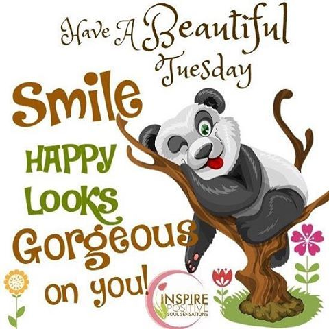 Happy Tuesday! SMILE HAPPY LOOKS GORGEOUS ON YOU. Pass it on  #behappy  #HAPPINESS  #bekind  #forgiveness  #attitude #happiness #positiveattitude  #gratitude  #joy  #choices  #change  #courage  #choosehappiness  #youarebeautiful #countyourblessings #beyourself  #believe  #positivewords  #youareblessed  #givelove #positivemind  #strength  #awareness  #encouragement  #peace  #strength  #healing  #hope  #heart  #nevergiveup Poster by Babz www.facebook.com/InspirePositiveSoulSensations