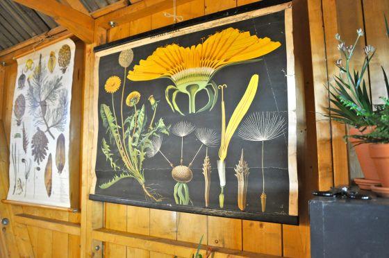 Planten illustraties VTWonen Barn Woonbeurs