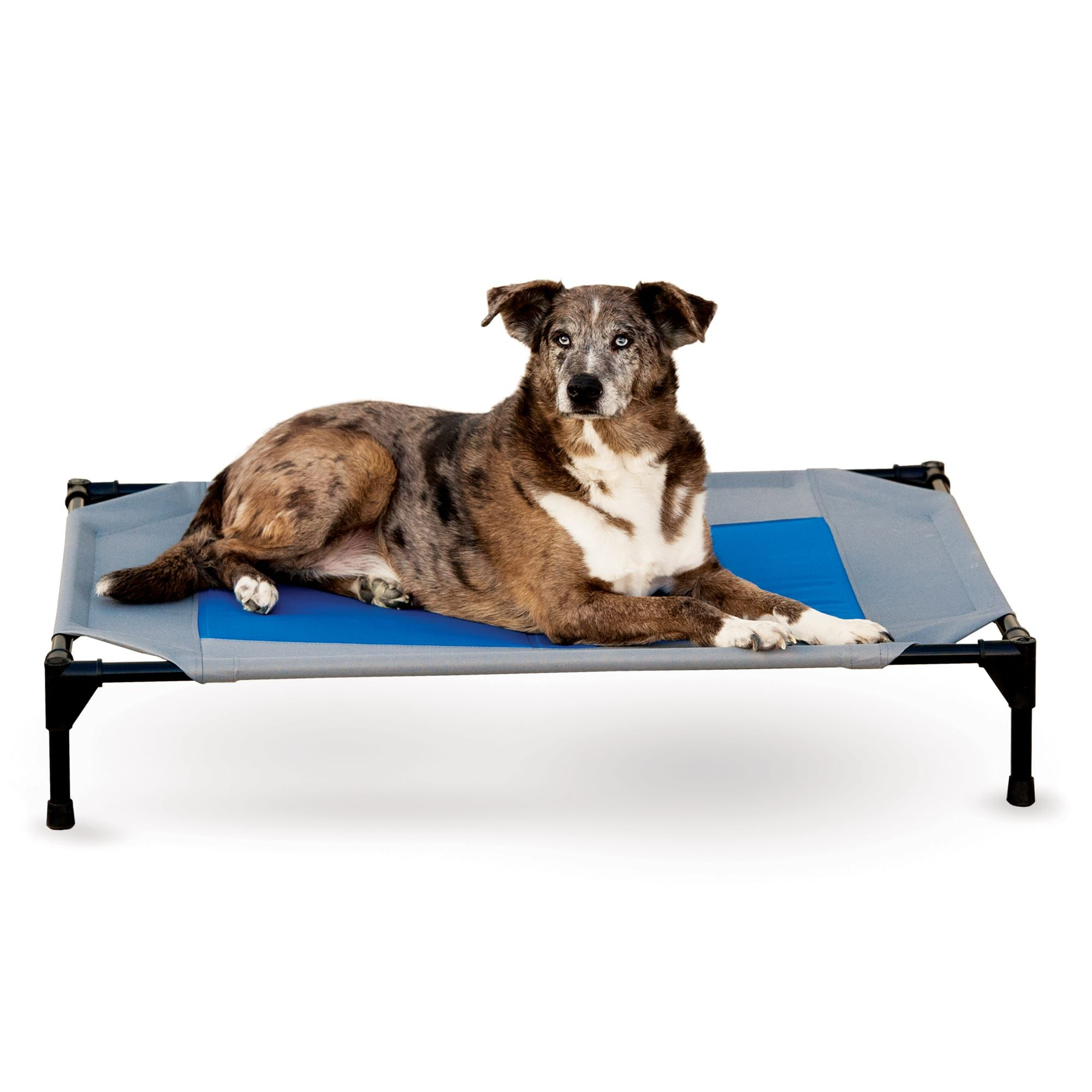 K H Cooling Pet Cot 42 L X 30 W Large Blue Cool Dog Beds