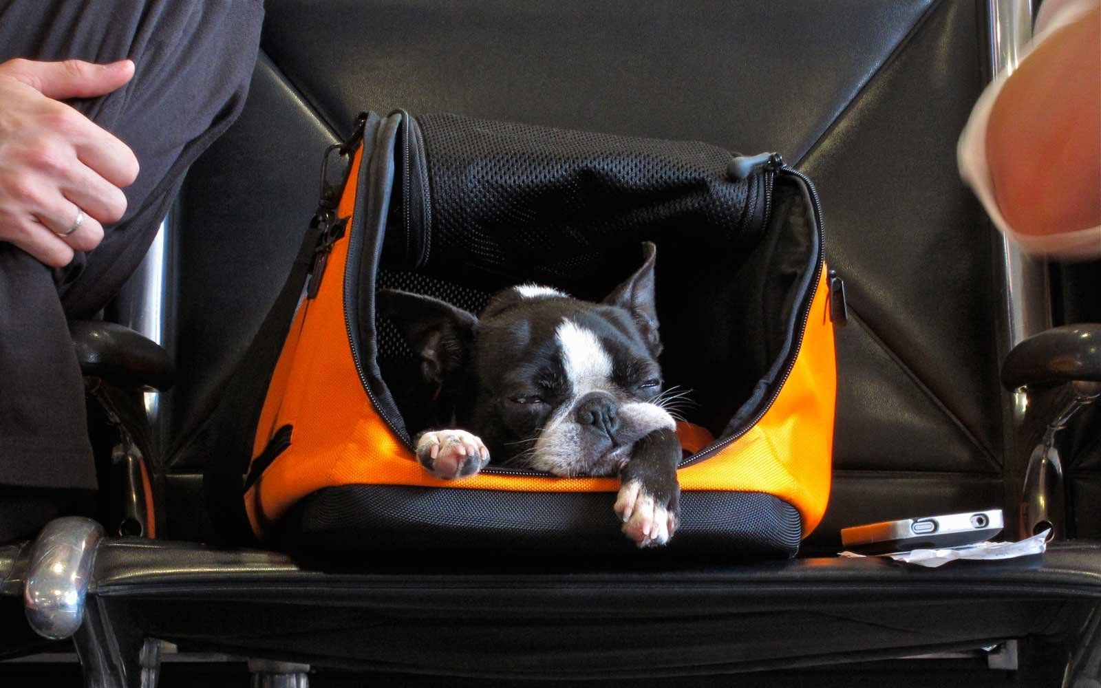 Southwest Airlines Just Overhauled Its Animal Policy