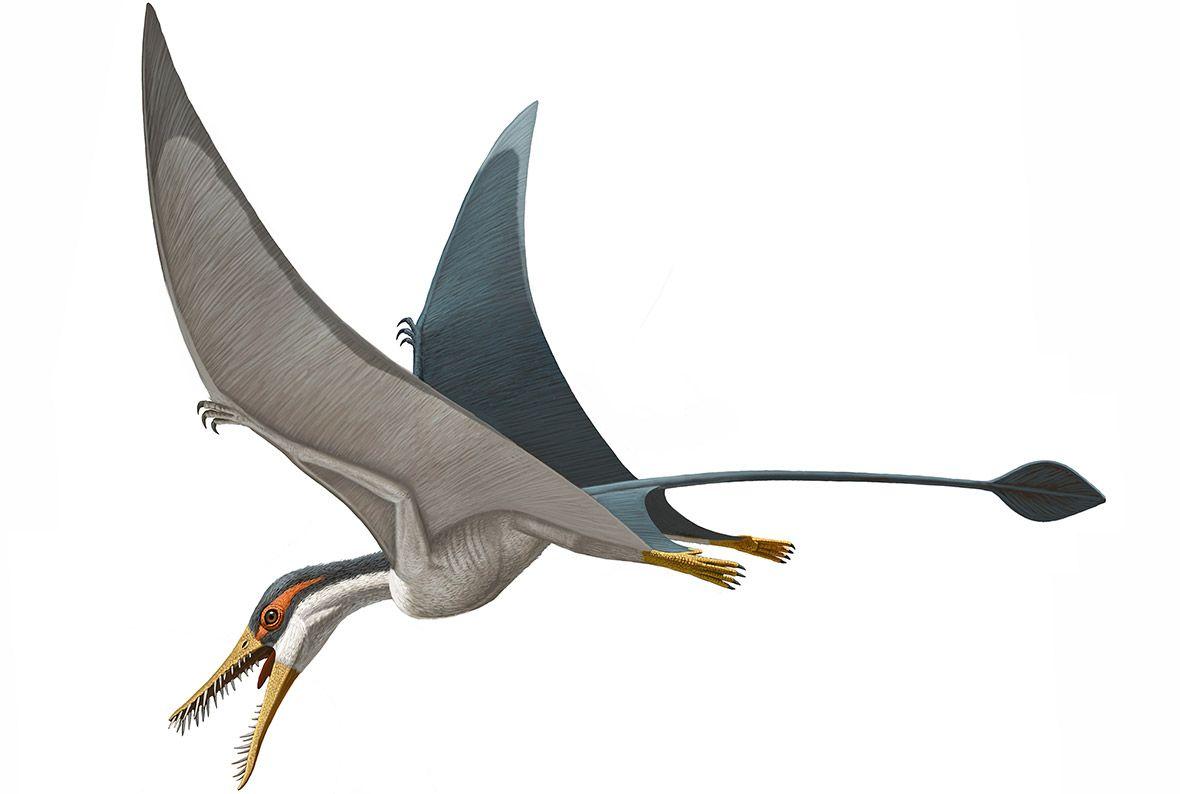 Rhamphorhynchus | Pterosaurs-Pterodactyl | Pinterest ... - photo#30