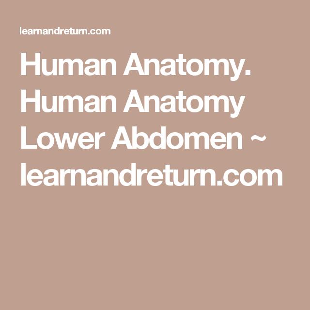 Human Anatomy Human Anatomy Lower Abdomen Learnandreturn