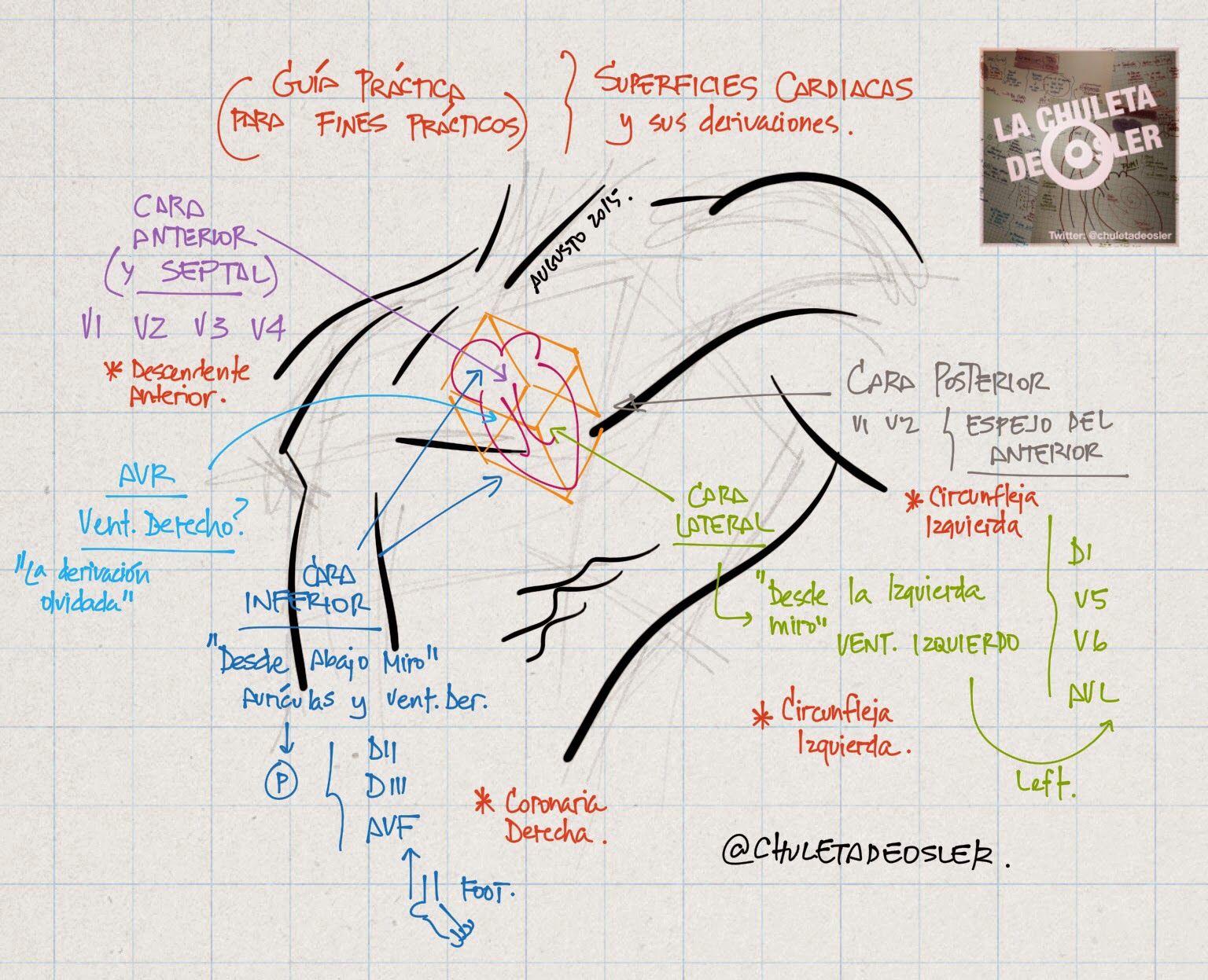 La chuleta de osler cardiologa superficies cardiacas y su la chuleta de osler cardiologa superficies cardiacas y su relacin al ecg urtaz Images