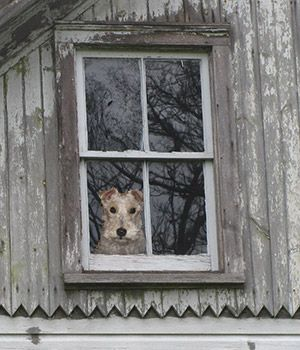 the truth about old wood windows window designs energy saving windowsand window repair