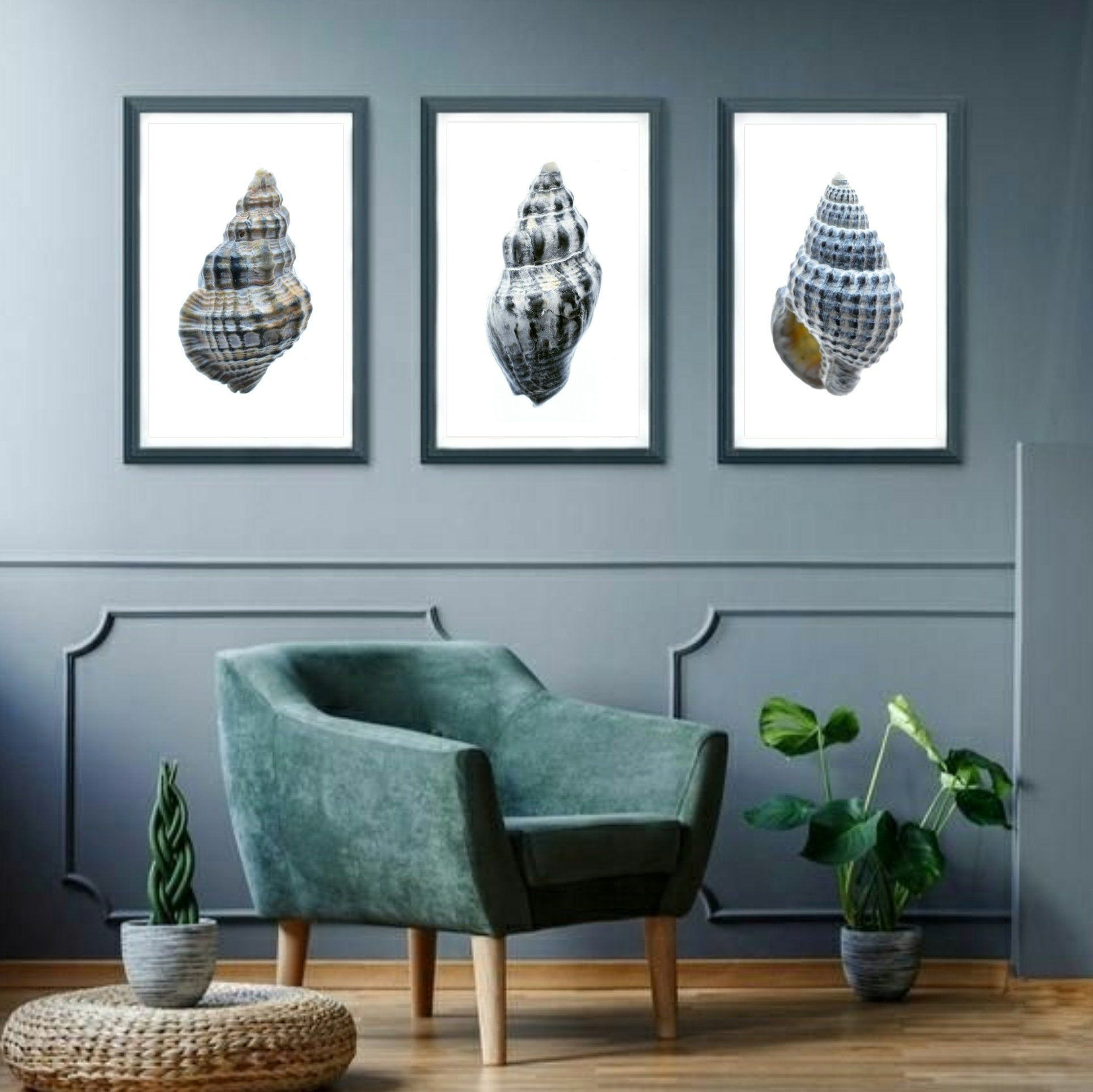 Seashell print set3 piece shell artworkscoastal wall art