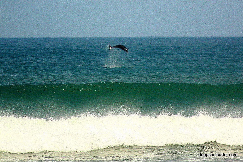 четкое ощущение, пляж волна темрюк фото дельфины этот