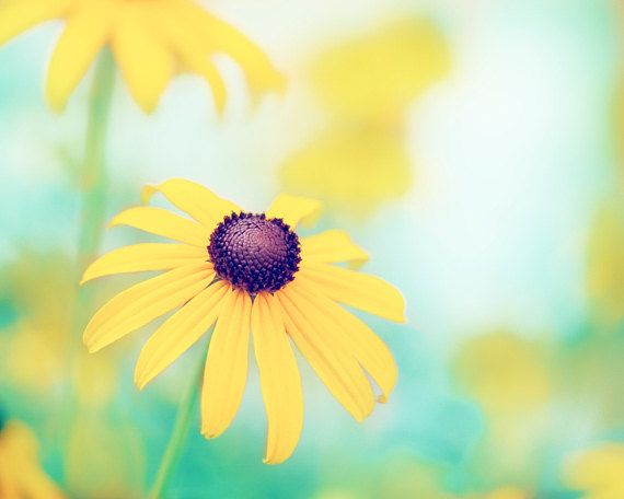 Flower photography yellow turquoise teal colorful mint blue green flower photography yellow turquoise teal colorful mint blue green nature floral spring wall print 20x24 24x30 photograph cheerful mightylinksfo