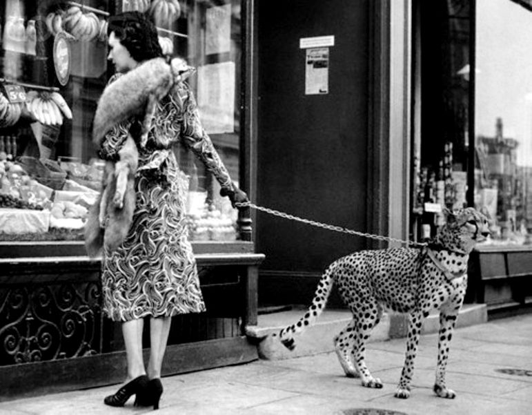 z- Phyllis Gordon w Pet Cheetah, 1939