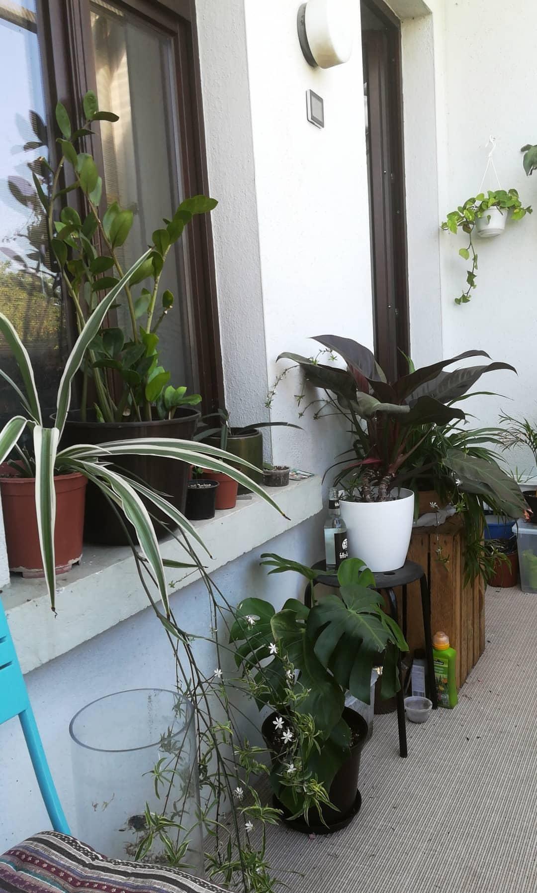 Gruner Balkon In Leipzig Balkon Pflanzen Bepflanzung Pflanzen