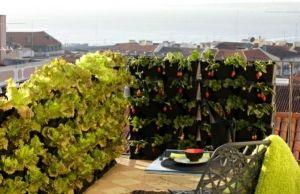 Gemüse Auf Dem Balkon ? Einen Hochbeet-garten Anlegen | Balkon ... Balkon Gemuse Garten Anlegen