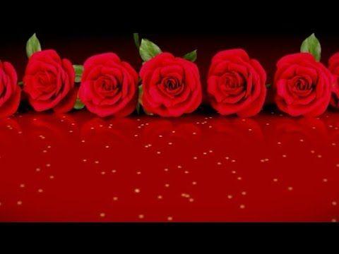 اجمل تهانى عيد الاضحى2017 عيد سعيد بصوت ماهر زين Youtube Rose Flowers Youtube