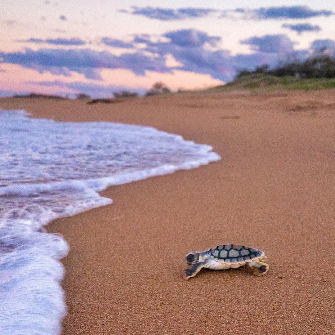 Instagram Save the sea turtles, Happy australia day