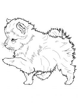 Pomeranian Dog Puppy Coloring Pages Dog Coloring Page Animal