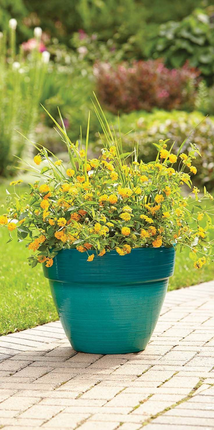A colorful planter adds oomph to your outdoor space—and this teal ...