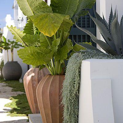 Destination Landscape Inspiration – Alys Beach, Fla. thinkingoutsidetheboxwood.com