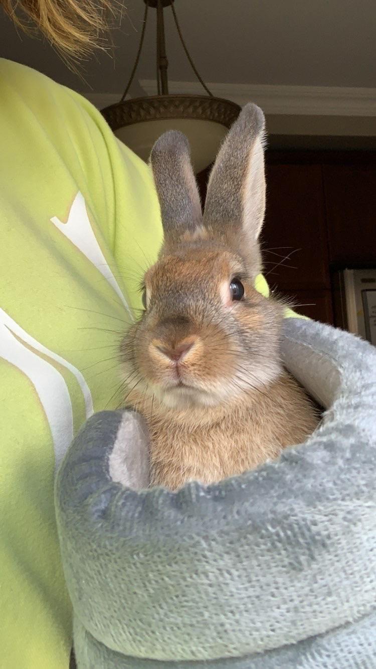 Rabbits Bunnies Bunnies Bunny Rabbit Bunny Rabbit In 2020 Rabbit Cute Little Animals Otters Cute