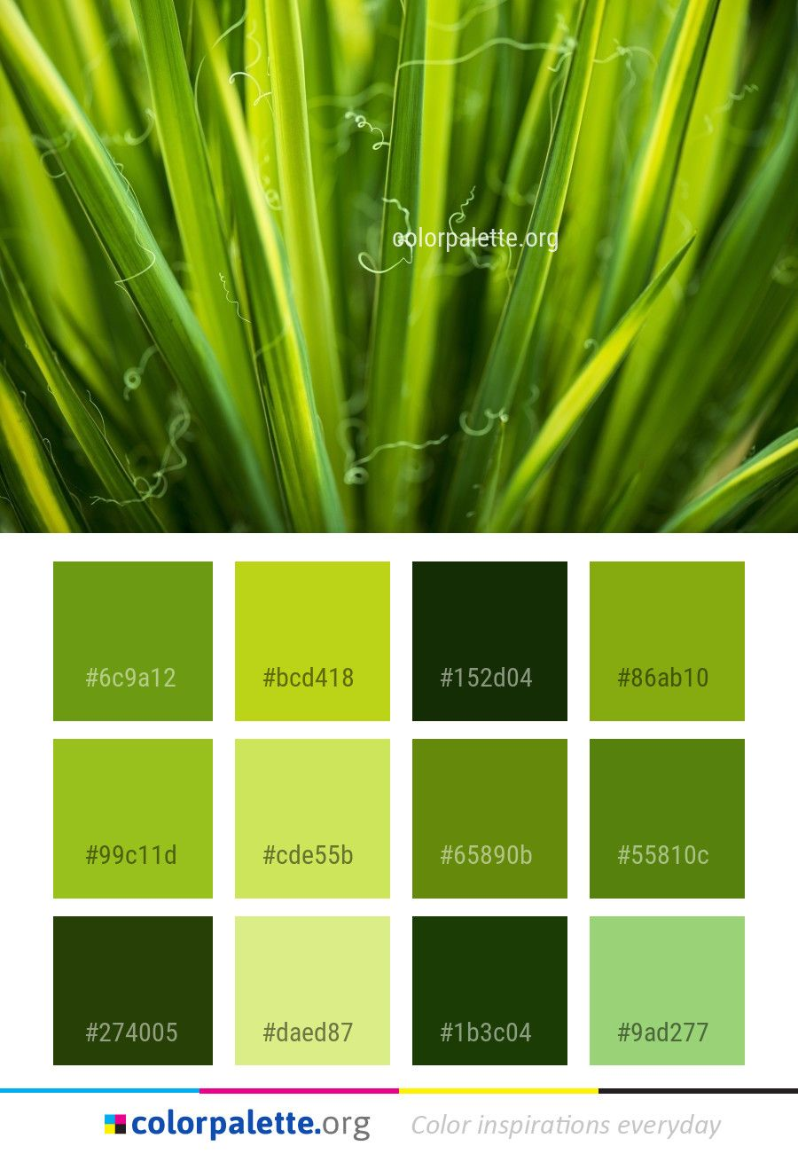 Green Grass Family Color Palette Colors Inspiration Graphics Design Inspiration Beautiful Colorpalette Palet Family Coloring Color Palette Grass Family