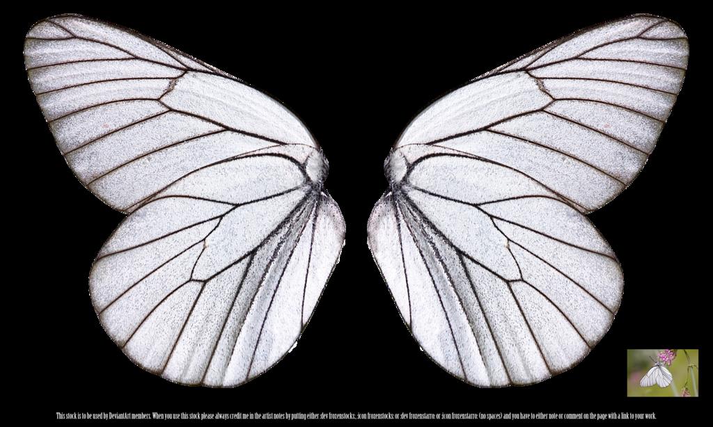 White Butterfly Wings By Frozenstocks On Deviantart Butterfly Wing Tattoo Butterfly Wings Pattern Butterfly Wings