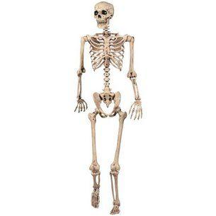 "$42.53- 60"" Tall Skeleton"