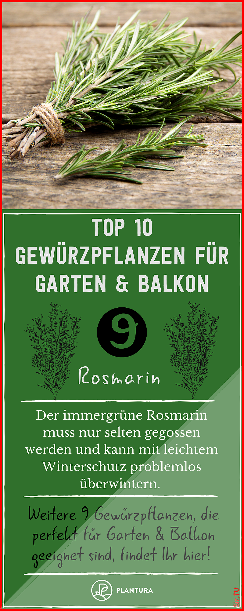 #Balcon #best #the #garden #Gew # Plantura # Balkon-      – winter garden